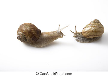 twee, snails, gezicht om te confronteren, communicatie, concept