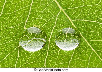 twee, transparant, druppels, op, groen blad
