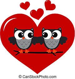twee, uilen, verliefd