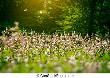 twee, vlinder, op, bloemen