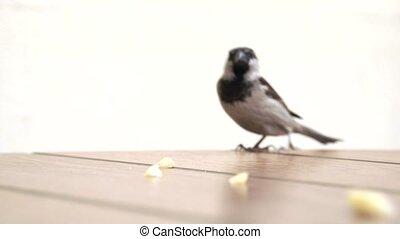 twee vogels, wedijveren, voor, kruimels