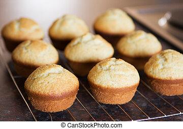 Twelve freshly baked vanilla muffins