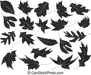 Twenty Black and White Leaves