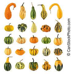 High resolution set of twenty-five diverse colorful pumpkins on white background