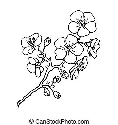 Twig cherry blossoms - Sketch. Twig sakura blossoms . Vector...