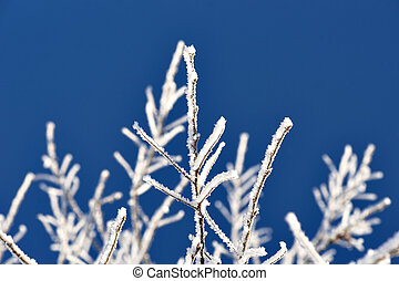 Twig covered in snow and ice crystals on deep blue sky