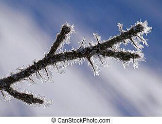 Twig covered with hoarfrost