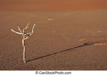 Twig in the namib