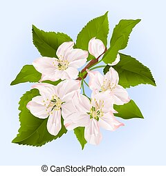 Twig of apple tree with flowers vector.eps