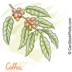 Twig of coffea. Watercolor style.