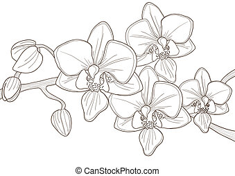 twig of orchid - Vector illustration of beautiful twig of...