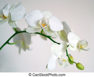 orchid flowers on light