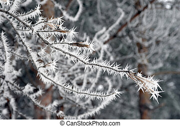 Twig of tree hoar-frost covered, shallow DOF