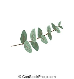 Twig with green leaves, floral design element vector Illustration on a white background