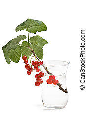 twig with of red currants in a glass