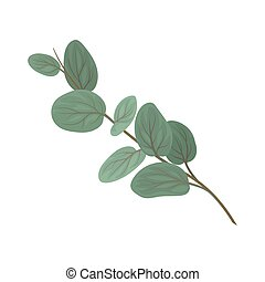 Twig with rounded green leaves, floral design element vector Illustration on a white background