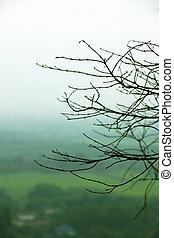 Twigs in winter