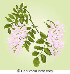 Locust tree twigs with leaves and flowers watercolor vintage vector illustration editabe hand draw