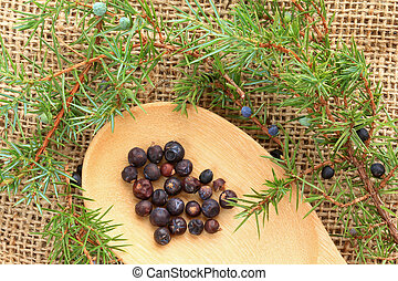 Twigs of Juniper and the Berries