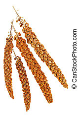 Twigs of red millet on white background. Top view.