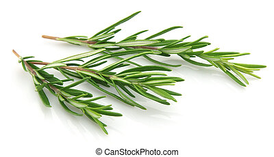 Twigs of rosemary on a white background