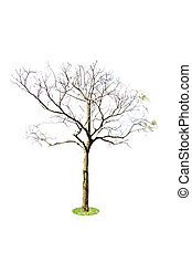 Twigs Tree isolated from the background.