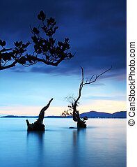 twilight and dead tree in the sea