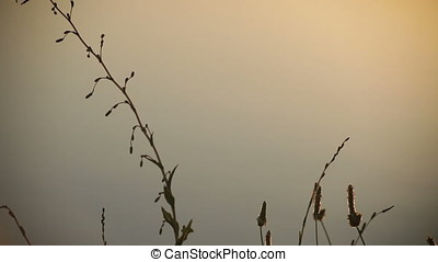 Twilight Backlit Wild Plants Silhouette Pan - Twilight...