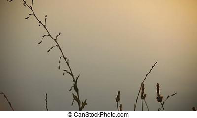 Twilight Backlit Wild Plants Silhouette Pan - Twilight...