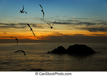 Twilight in California - Seagulls flying over the Pacific ...
