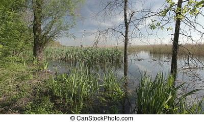 Twilight on Marsh - Twilight on marsh. Canebreak or...