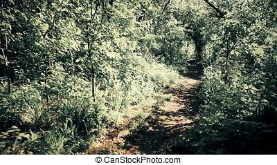 Twilight Secret Forest Lane - Secret forest lane at...
