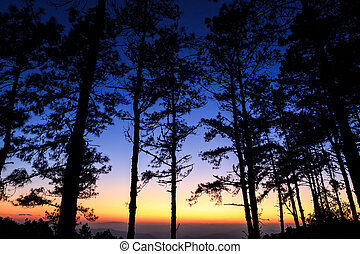 Twilight sky with silhouette pine tree