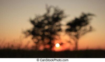 Twilight sunset scene - two trees