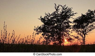 Twilight sunset - two trees panning