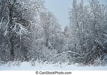 Twilight winter forest