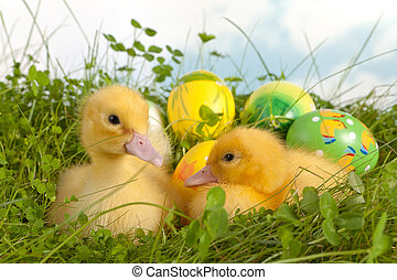 Twin ducklings with easter eggs