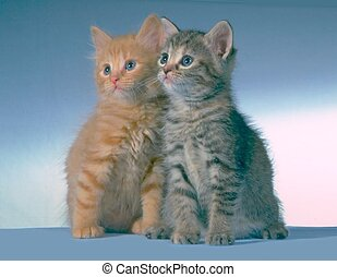 twin kittens - borrowed theses two kittens for a photo shoot