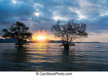 Twin tree in the sea with color of the sunset