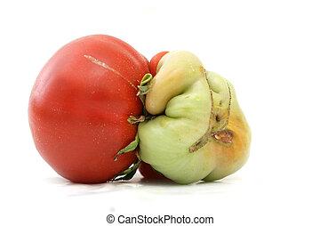 twins tomato