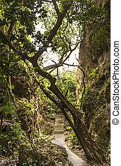 Twisted Banyan at Eluanbi Park, Kenting National Park