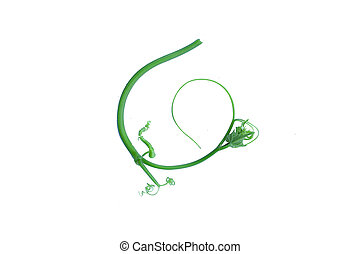 Twisted jungle vines liana plant with heart shaped green ...
