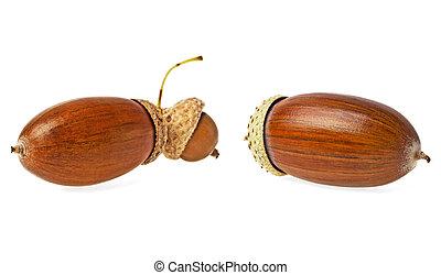 Two acorns isolated on white background