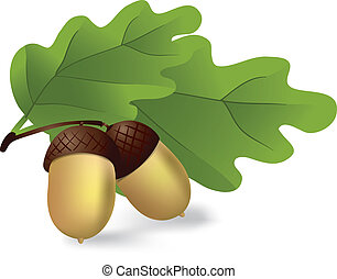 two acorns with green leaves