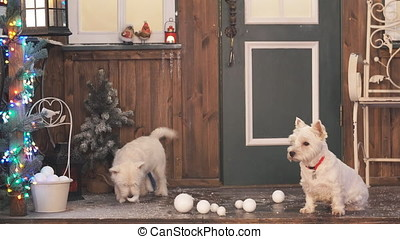 Two adorable dogs in Christmas interior.