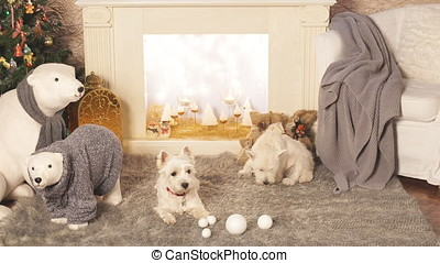Two adorable dogs in Christmas interior. - Two adorable dogs...