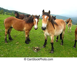 Two adult horses posing to camera in a meadow