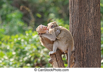 Two affectionate monkeys sitting on tree, hugging each other
