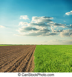 two agricultural fields and sunset in clouds over it