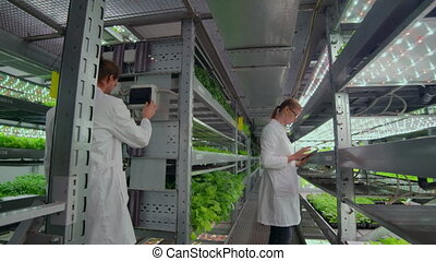Two agronomists in white coats at a modern vegetable...